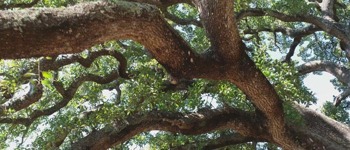 tree-X-PAGINA